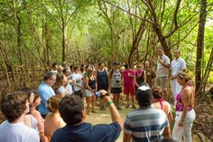 Equinox Eco Tour: This guided tour through the jungles and mangroves of our resort will teach you about the Riviera Maya's environment and Mayan culture