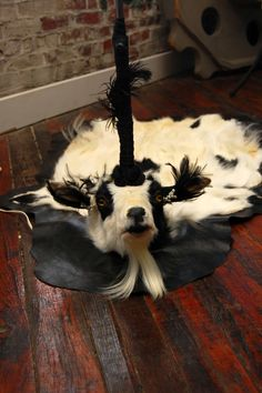 Diamond Tooth Taxidermy: A Most Unusual Commission