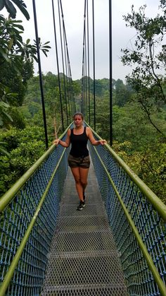 Hiking trough the MacRitchie Reservoir or called the tree top walk