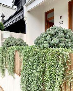 Terrace Garden, Garden Beds, Retaining Wall Design, Narrow Garden, Shade House, Professional Landscaping, Balcony Plants, Coastal Gardens, Backyard Makeover