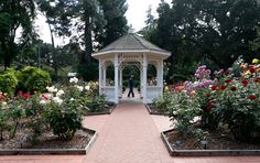 A gazebo stands amid the San Mateo Arboretum Society's rose garden at San Mateo Central Park on Monday, May 4, 2015. (Nhat V. Meyer/Bay Area News Group)