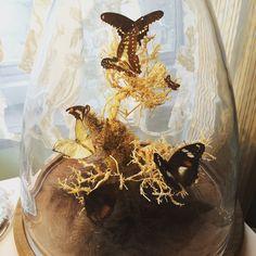 蝶のオブジェ。ガラスドーム内での架空自然観。 | 神戸インテリアショップ ノーブズ NOBU'S | 兵庫 神戸 三宮 インテリアデザインショップ
