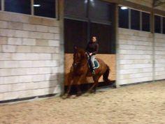 Projekt: Skoczny, wiosenny debiut - Wspieram.tohttps://wspieram.to/1475-skoczny-wiosenny-debiut.html #horse #sport #koń