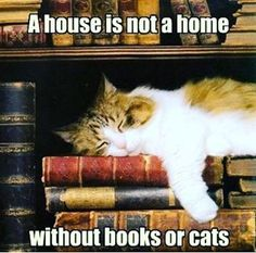 For all of the cat lovers out there ❤️ #bookmemes #cats #catlover #booksandcats  #booksarelife #readingisfun #readingislife #readingtime #readingmode #read #reader #reading #readers #book #books #booklife #booknerd #bookworm #booklover #bookaddict #bookaholic #bookholic #happyreading #booklovers #bookaholics #avidreader #readersofinstagram