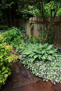 shade plants...Lamium, Hosta - Lamium is an amazing ground cover that can fill a bed in one or two seasons - pink or purple flowers
