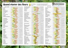 When to plant flowers. Seeds pots list Annual Flowers Biennial flowers Perennial flowers days sowing planting distance - My Website 2020 Flowers Uk, Annual Flowers, Bulb Flowers, Summer Flowers, List Of Flowers, When To Plant Bulbs, When To Plant Seeds, Planting Bulbs, Planting Seeds
