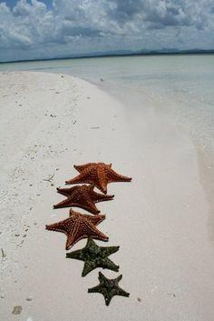 •Pretty Starfish All In A Row•