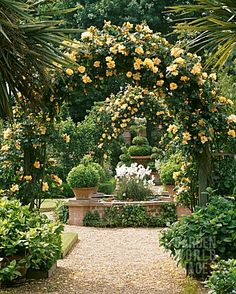 ARCHES_OF_ROSA_MAIGOLD_AT_EAST_RUSTON
