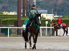 23日の京都未勝利戦に出走を予定しているケースバイケース