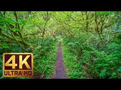 Walking in the Woods - UHD Relaxation Video with Bird Singing and Forest Sounds - 20 minutes Relaxation Video, Relaxation Meditation, Virtual Museum Tours, Virtual Tour, Relaxing Gif, Relaxing Music, Walking Videos, Forest Sounds, Virtual Travel