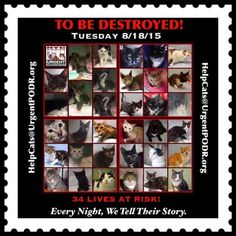 TO BE DESTROYED 08/18/15 - - Info TO BE DESTROYED - Click for info & Current Status: http://nyccats.urgentpodr.org/montage-071215/