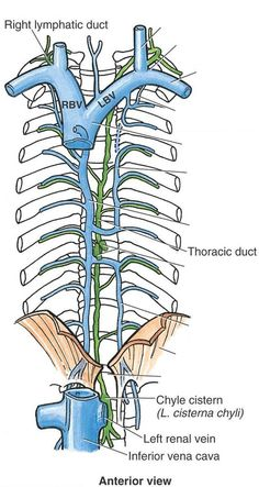 Lymphatic & thoracic duct entrance (venous angles)