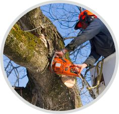 Kronenpflege und Kroneneinkürzung Circular Saw Reviews, Best Circular Saw, Tree Decorations, How To Remove, Tools, Nursing Care, Trees, Lawn And Garden, Instruments