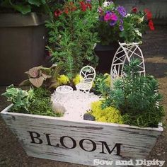 Mini Garden - sweet fairy garden in a wood planter stencilled with 'bloom' on the side