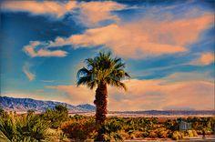 Desert Night Begins - painting by Douglas MooreZart  #fineart #douglasmoorezart #anzaborrego #palmtree #painting #desert
