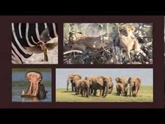 Experience the wilderness and stay in luxury? Take a tour of Royal Zambezi Lodge - where luxury meets the wild. Wilderness, Destinations, Lion Sculpture, Tours, Statue, Film, Luxury, Into The Wild, Movie