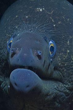 Califonia Moray Eel | Flickr - Photo Sharing!