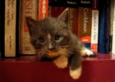 kittie sleeping in the bookshelf