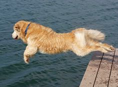 Jack enjoying diving off the dock.