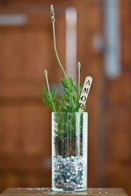 Lavanda como recuerdo de bodas - lavender wedding favours - Lavanda como uma lembrança de casamento #casarcasar