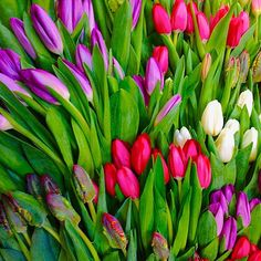 Tulips are a better option for Valentine's Day since they are available locally in the MidAtlantic this time of year. Growing Flowers, Tulips, Frost, January, Valentines, Day, Instagram Posts, Plants, Valentines Diy