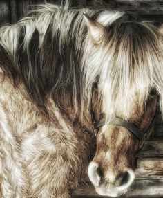 Beautiful fuzzy horse with the softest looking coat, such a sweet face!