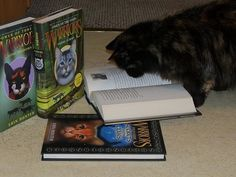Caught Reading -- by pokemongirlhope -- This is Blackie cat reading her warrior cat books! Warrior Cat Memes, Warrior Cats Series, Warrior Cats Books, I Love Cats, Crazy Cats, Cute Cats, Funny Cats, Funny Animals, Warriors Erin Hunter