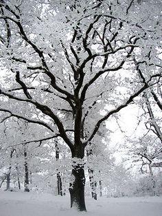 Winter Szenen, Winter Magic, Winter Trees, Snowy Trees, Winter Colors, Snow Scenes, Foto Art, Winter Pictures, Nature Pictures