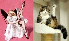 Bow chicka meow meow.  Cats are paired up with pin-up girls and the results are hilarious!