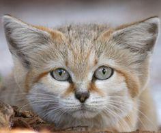 Big Cat Rescue - Tampa FL