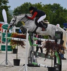 Seriously my dream horse... I think I'm in love
