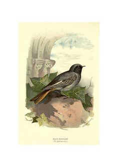 numbered hand carved American Redstarts signed hand printed limited edition 6 color reduction block print