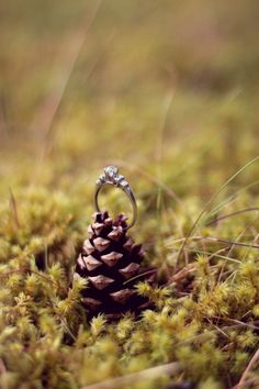 Pinecone Engagement Ring Scotland Engagement Shoot