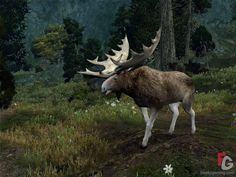 moose pictures | Age Of Conan: Hyborian Adventures the great moose screenshot