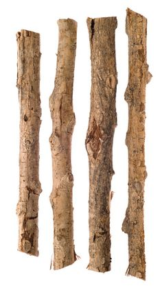 Twigs and Sticks Isolated on White Branches, Royalty Free Images, Sticks, Presentation, Stock Photos, Texture, Wood, Photography, Surface Finish