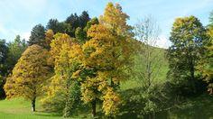 autumn in the Ennstal valley - Herbst im Ennstal Vineyard, Country Roads, Autumn, Beautiful, Outdoor, Horseback Riding, Outdoors, Fall Season, Vine Yard