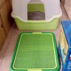 Custom Indoor Dog Potty With Side Panels For Doggie Daycare Bunk - Indoor dog bathroom solutions