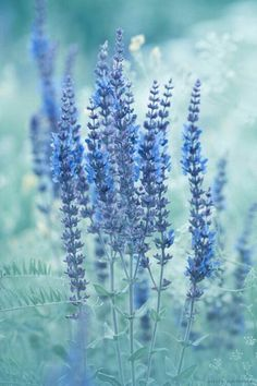 Flowers Aesthetic Pastel Blue Super Ideas – Best Home Plants Light Blue Aesthetic, Blue Aesthetic Pastel, Nature Aesthetic, Flower Aesthetic, Aesthetic Backgrounds, Aesthetic Wallpapers, Everything Is Blue, Blue Wallpapers, Jolie Photo