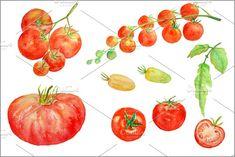 Watercolor Clipart - Tomato by Corner Croft on @creativemarket
