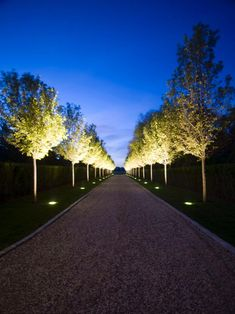 The outdoor path glows at night and creates a beautiful walkway. Callery Pear beautifully bloom in the day and are transformed at night with an ambient glow from up lighting.