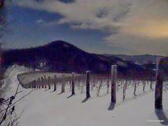Ankida Ridge Vineyard