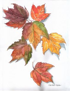 "I gathered these leaves from my yard in October. I was so taken with the color variation in each maple leaf that I had to try to capture it in watercolor.  9"" x 12"""