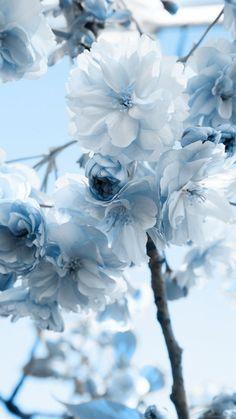 Wallpaper Iphone Pastel – blue flowers … – Famous Last Words Blue Flower Wallpaper, Blue Wallpaper Iphone, Blue Wallpapers, Pretty Wallpapers, Aesthetic Iphone Wallpaper, Nature Wallpaper, Aesthetic Wallpapers, Wallpaper Art, Wallpaper Backgrounds
