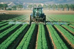 Farmer in machine spraying crop rows