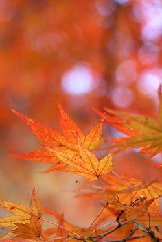 Orange leaf by hichako, via Flickr