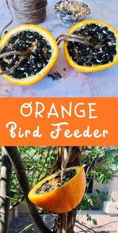 Orange bird feeder. Easy homemade DIY bird feeder recipe. Easy Crafts For Kids, Toddler Crafts, Crafts To Do, Art For Kids, Homemade Bird Feeders, Diy Bird Feeder, Outdoor Activities For Kids, Free Activities, Easy Bird