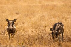 Etosha Park Namibia Africa, Park, Animals, Adventure Trips, Animales, Animaux, Parks, Animal, Animais