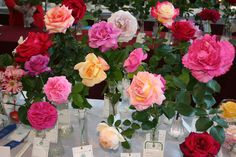 Some of the great roses from our Spring Show 2014