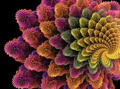 Fractal flower by *catman*, via Flickr