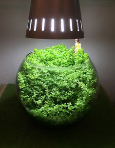 ほったらかしの小さな景色 | 京都精華大学水槽学部 Betta Tank, Fish Tank, Moss Terrarium, Terrariums, Plant In Glass, Plants In Bottles, Moss Plant, Nano Tank, Mini Bonsai
